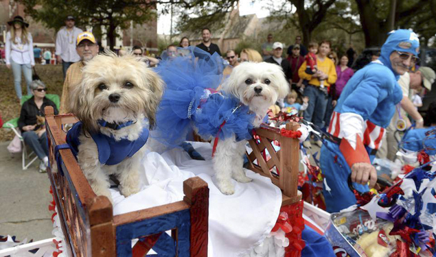 MARDI GRAS DOWNTOWN 2019: CAAWS MYSTIC KREWE OF MUTTS PARADE